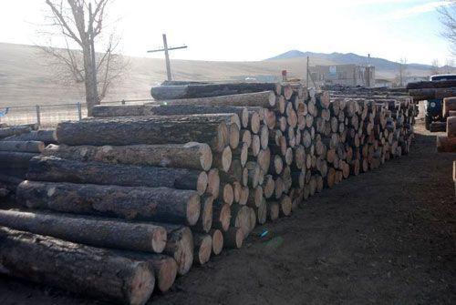 Хууль бус мод бэлтгэлийг хянах байнгын постууд ажиллаж байна