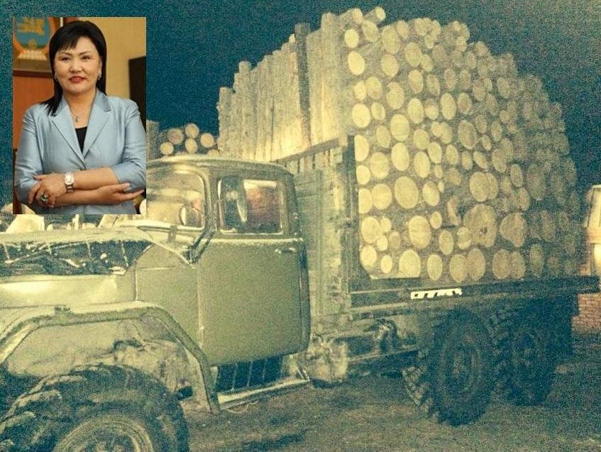 Д.Оюунхорол сайдын албан даалгавар модны хулгайчдыг өөгшүүлжээ