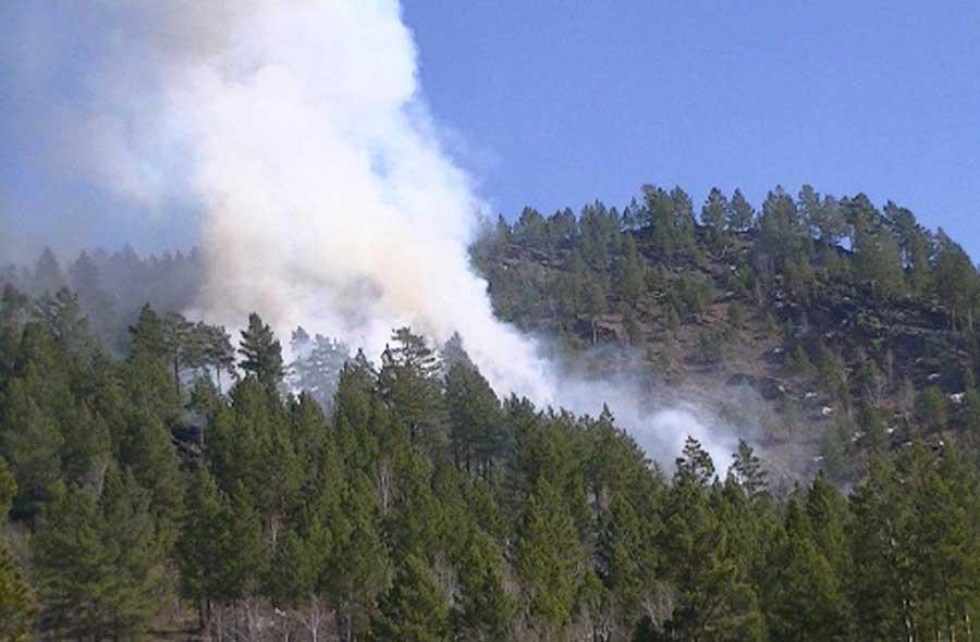 71 түймрийн эзэн холбогдогчийг тогтоож, 30.1 сая төгрөгийн хохирол нөхөн төлүүлжээ