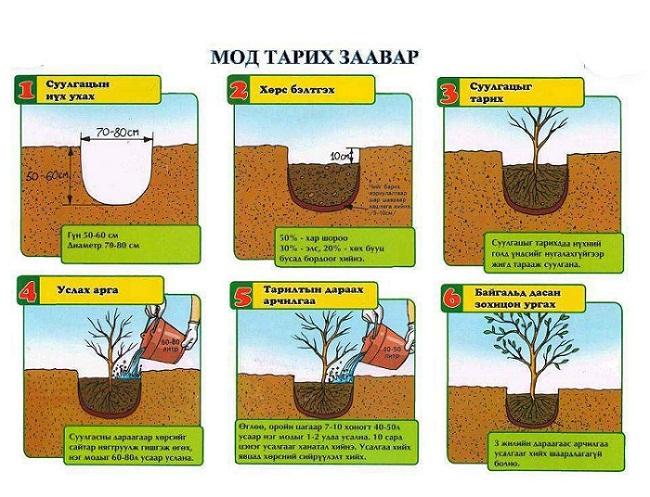 Мод тарих нь эх дэлхийдээ зориулж буй хамгийн том буян